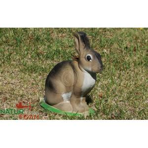 Zajac - sediaci (4) NF